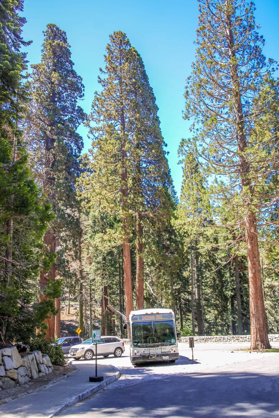 Bus Sequoia
