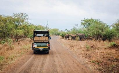 Safari im Krüger Nationalpark – Südafrika